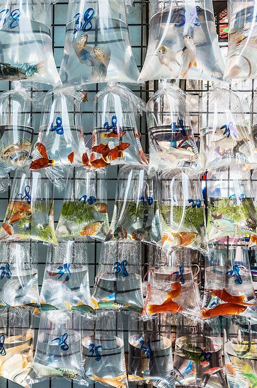 wpuszczanie-ryb-do-akwarium-sklep-akwarysyczny