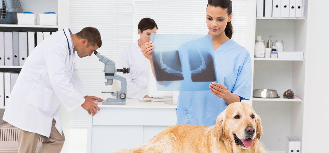 lecznica weterynaryjna marketing