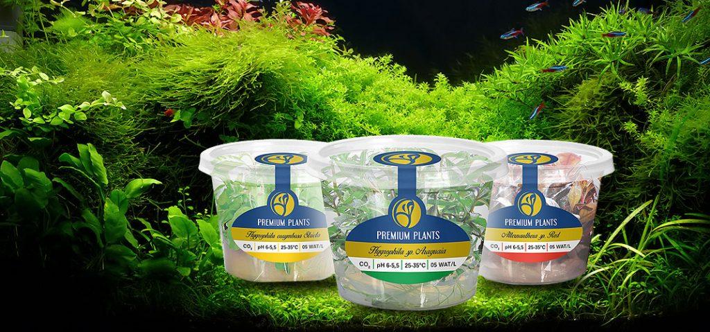 Rośliny Premium Plants - nowość !