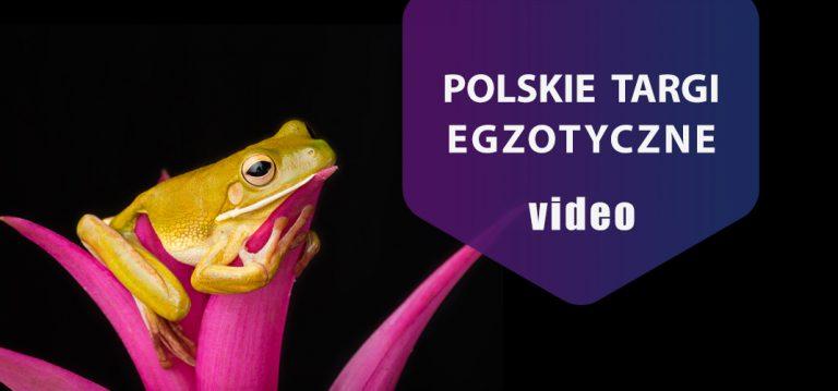 Polskie Targi Egzotyczne – relacja z imprezy.