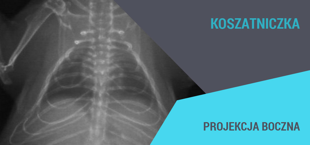 rentgenodiagnostyka gryzoni medikon