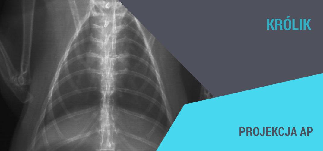 rentgenodiagnostyka gryzoni królik medikon