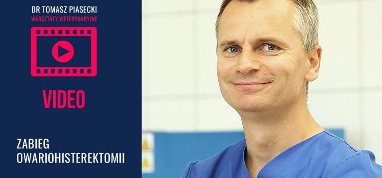 Owariohisterektomia królicy – Dr Tomasz Piasecki [video]