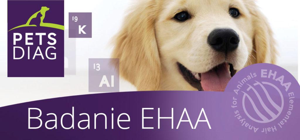 Badanie EHAA, które warto wykorzystać w diagnostyce psa !