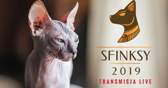 Plebiscyt na najlepsze produkty dla kotów!