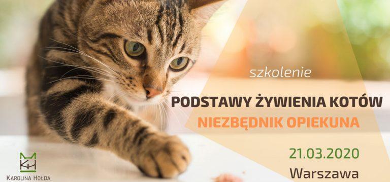 Podstawy żywienia kotów – niezbędnik opiekuna