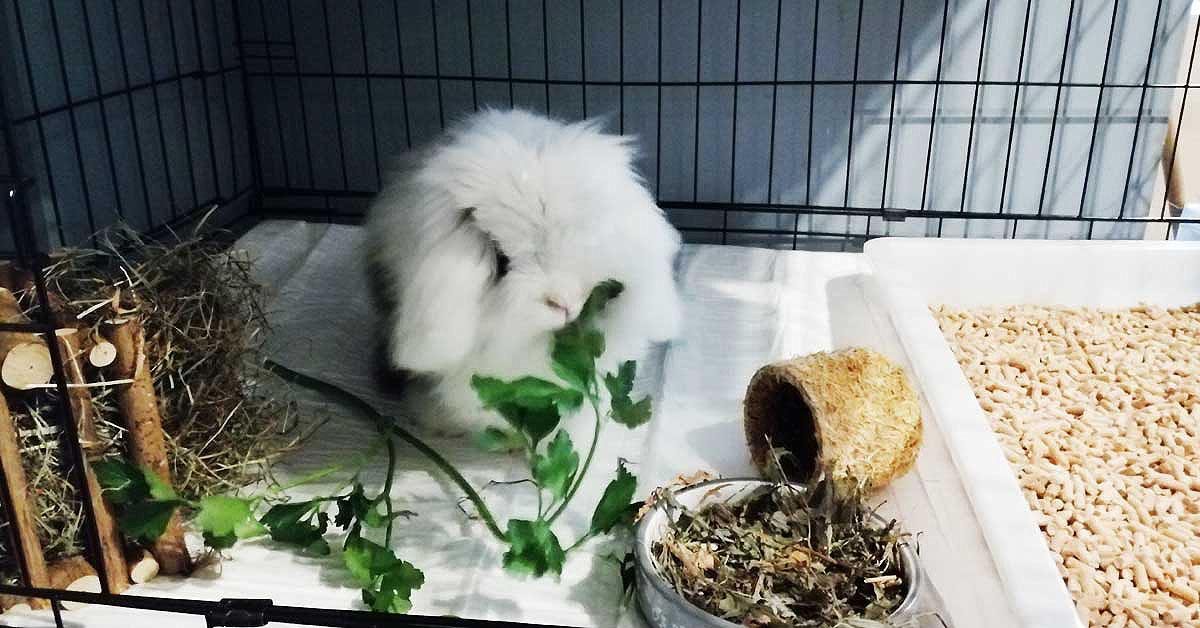 hodowla królików w domu