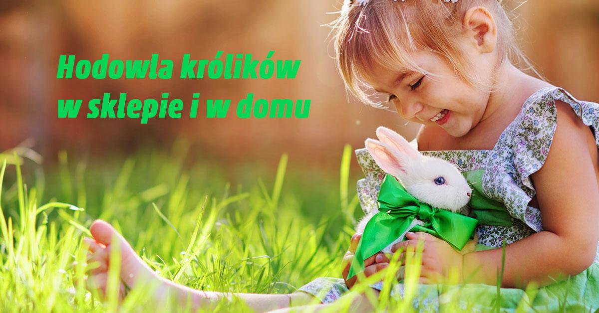 hodowla królików