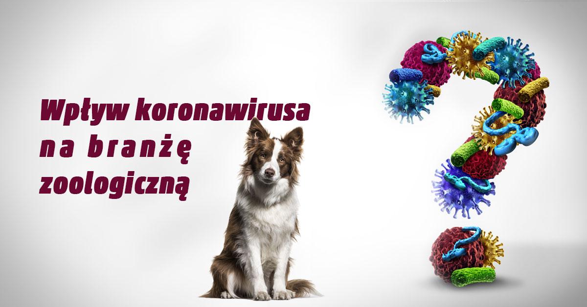 koronowirus a zwierzęta