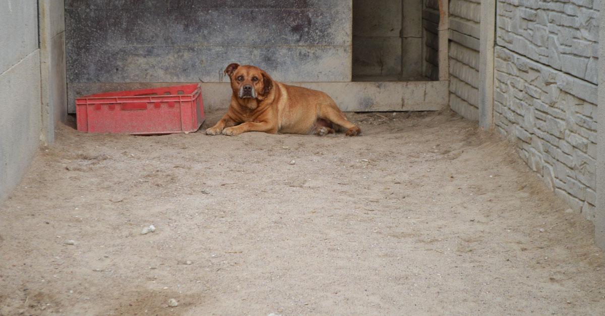 tragiczne warunki w schronisku dla zwierząt