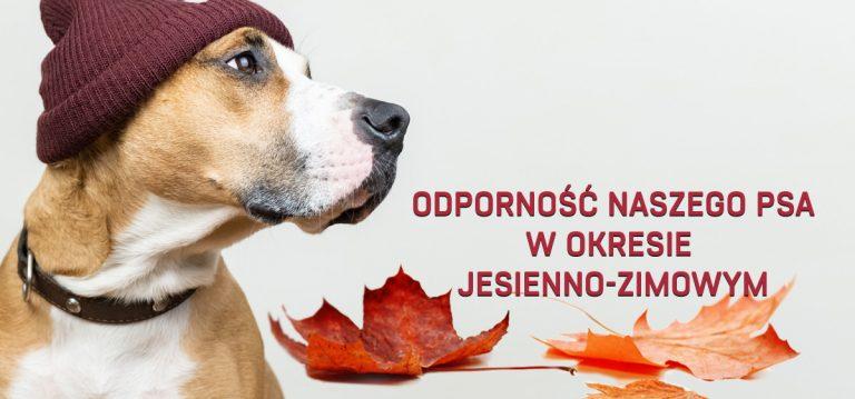 Odporność naszego psa w okresie jesienno-zimowym