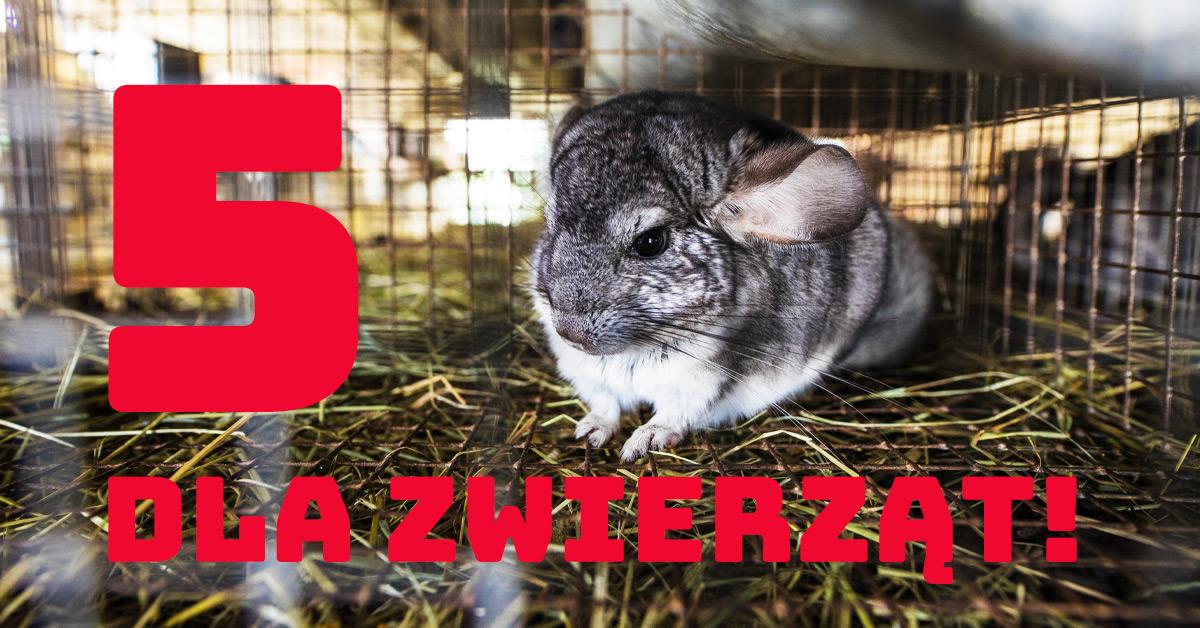 Piątka dla zwierząt – zwyciężyliśmy!